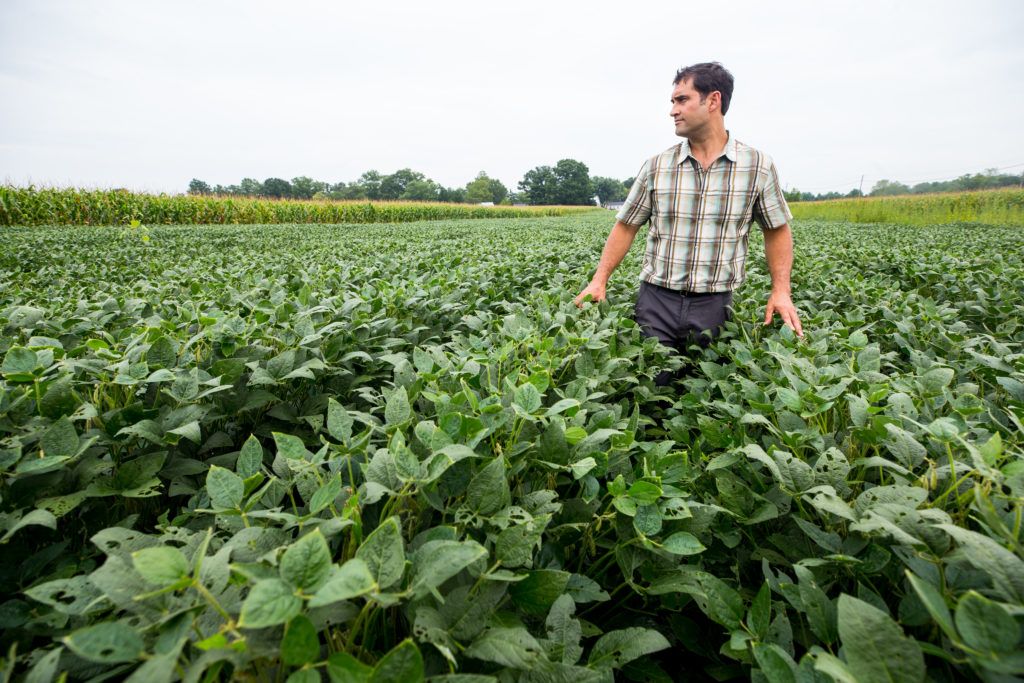 Man standing in field of crops
